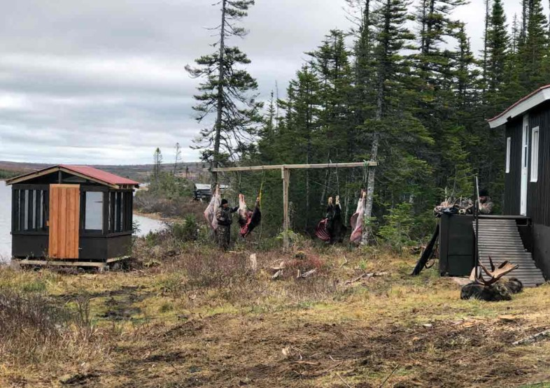 Newfoundland Hunting Lodges Moose Woodland Caribou and Black Bear at Red Indian Lake Outfitting