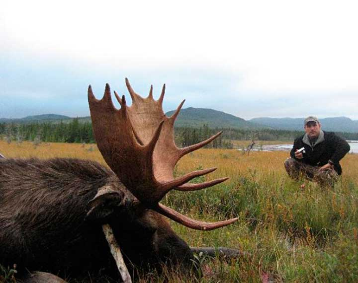 Newfoundland Moose Hunts Woodland Caribou and Black Bear at Red Indian Lake Outfitting NL